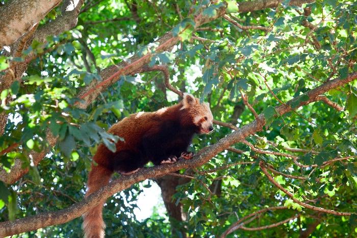 #Symbio #Wildlife Park via brunchwithmybaby.com