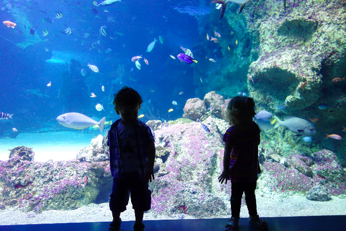 #sealife #sydney #aquarium #australia via brunchwithmybaby.com