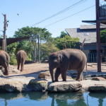 Where The Wild Things Are: A Day At Taronga Zoo With Little Kids