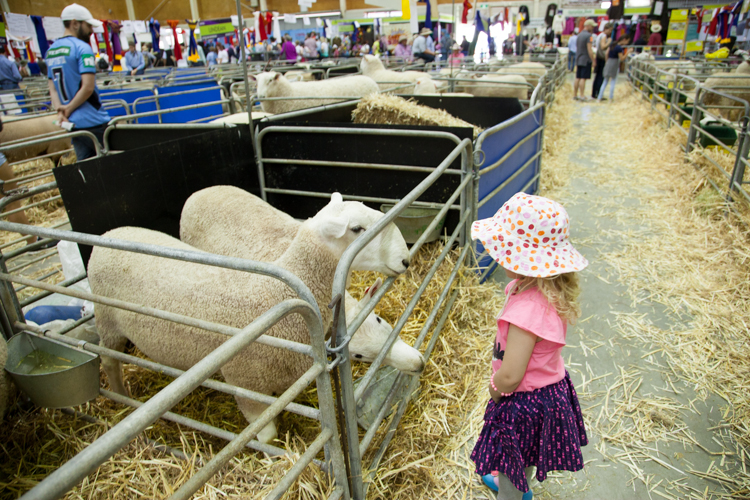 royal easter show programme guide