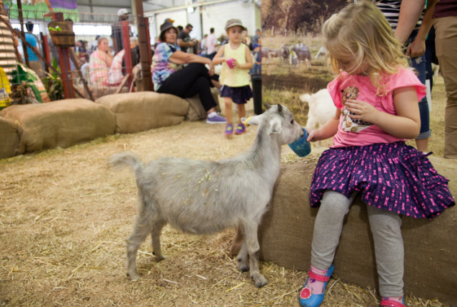 #Sydney Royal #Easter Show Guide For Little Kids via christineknight.me