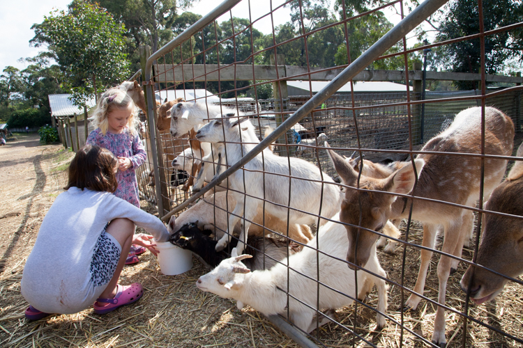 Golden Ridge Animal Farm #Sydney via christineknight.me