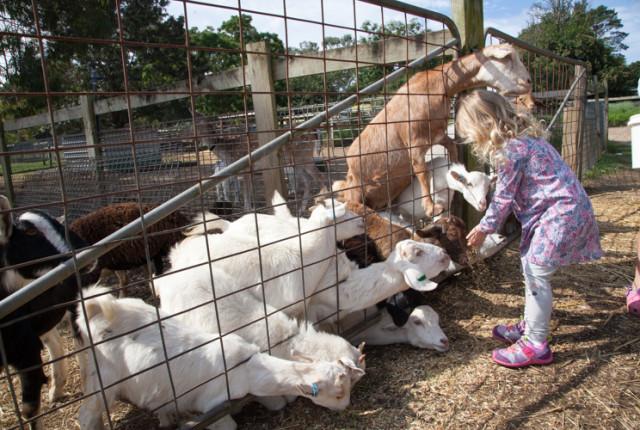 Golden Ridge Animal Farm #Sydney via christineknight.me