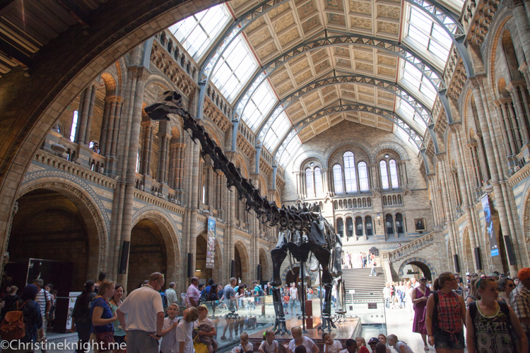 Natural History Museum #London via christineknight.me