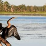Kakadu Dreaming: My Travel Bucket List