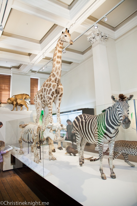 Wild Planet at the Australian Museum via christineknight.me