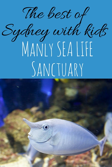 Manly SEA LIFE Sanctuary #Sydney via christineknight.me