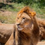 Top Tips For Visiting Sydney Zoo
