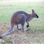 The Central Gardens Nature Reserve Merrylands: Southwest Sydney with Kids