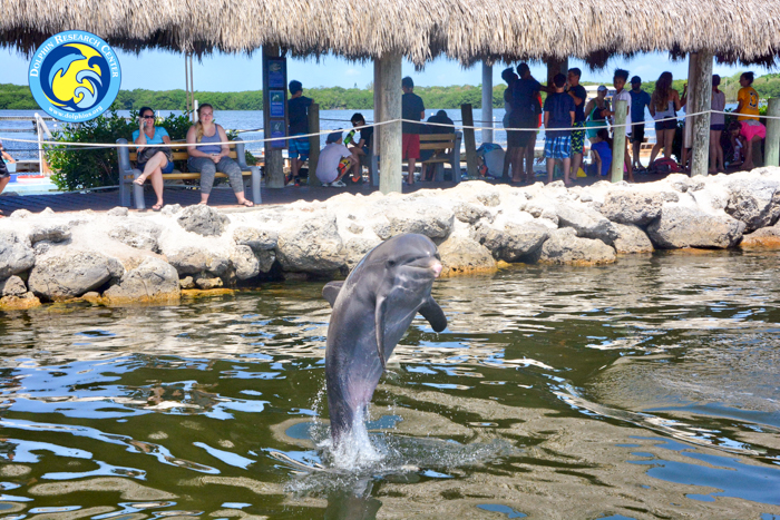 Dolphin Research Centre, Florida Keys via christineknight.me