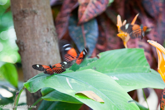 Butterfly Conservatory Key West, Florida Keys, via christineknight.me