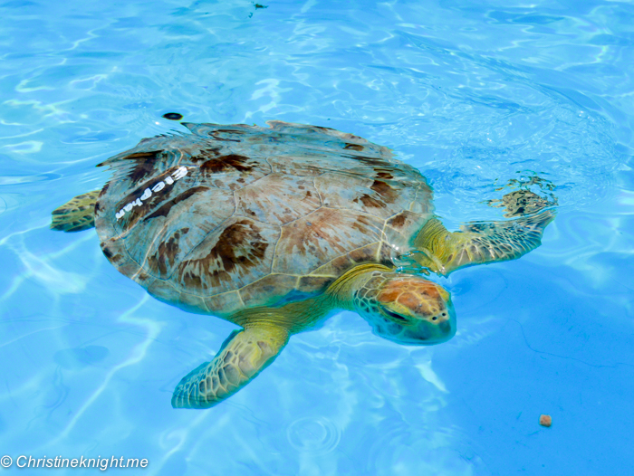Marathon Turtle Hospital, Florida Keys, via christineknight.me