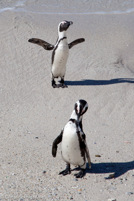Boulders Beach via christineknight.me