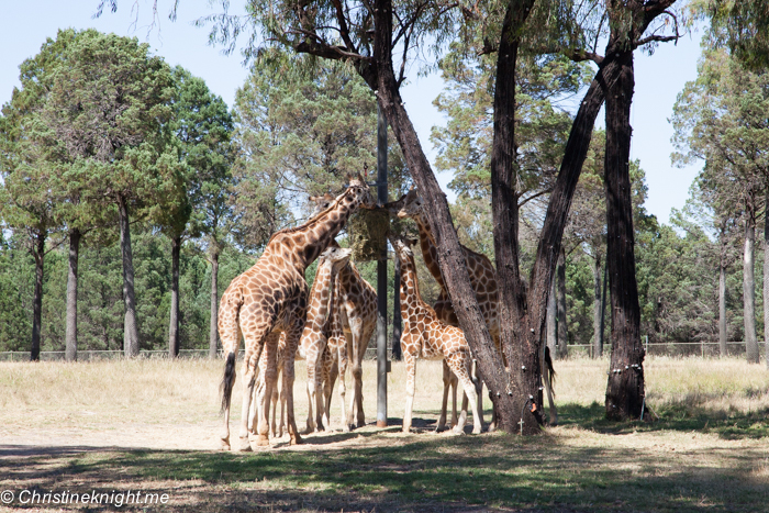 9 Tips For Visiting Taronga Western Plains Zoo, Dubbo, Australia