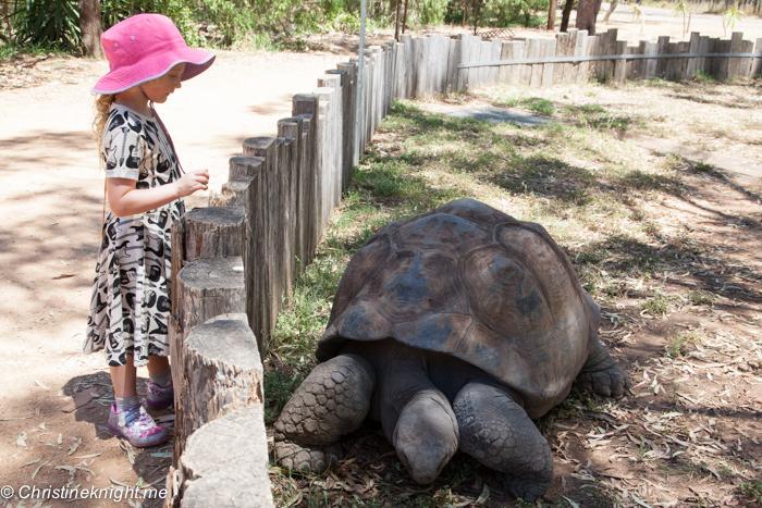 9 Tips For Visiting Taronga Western Plains Zoo, Dubbo, Australia