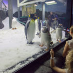 SEA LIFE Sydney Aquarium Penguin Expedition