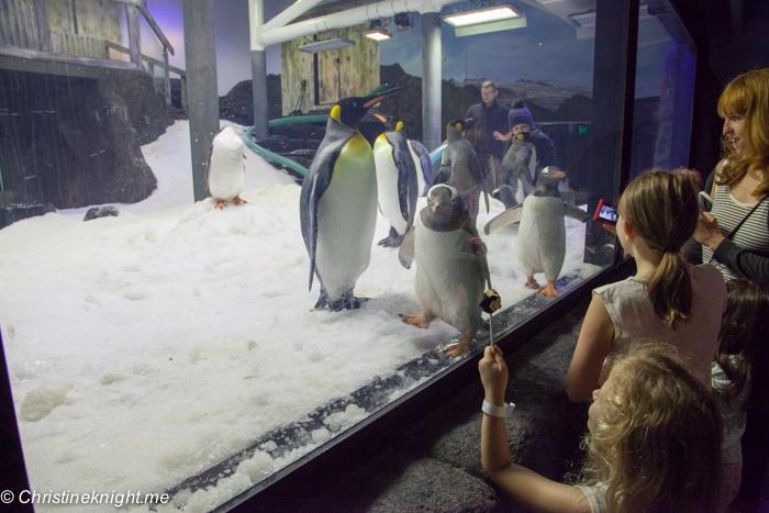 Sea Life Sydney Aquarium Penguin Expedition Adventure Baby