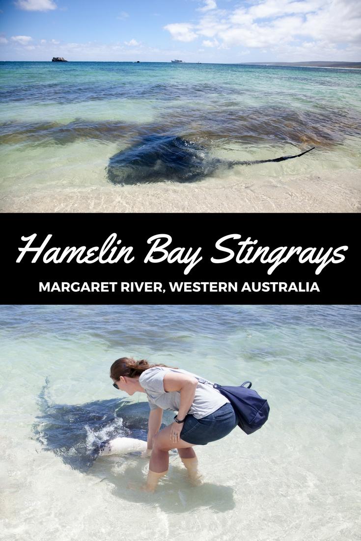 Hamelin bay Stingrays, Western Australia