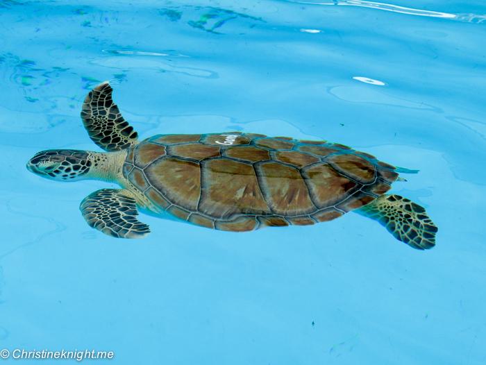 Marathon Turtle Hospital, Florida Keys, via christineknight.me