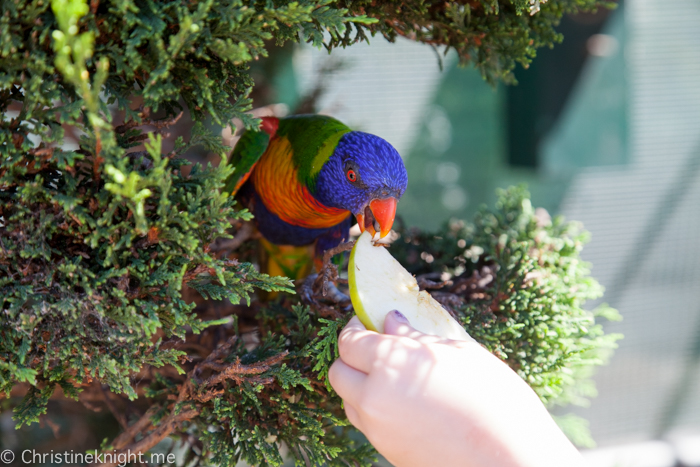 Canberra Walk-In Aviary, Australia