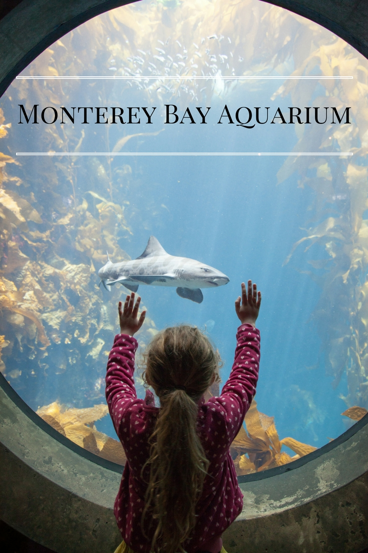 Monterey Bay Aquarium - Adventure, baby!