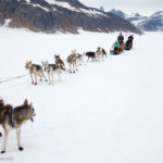 Dog Sledding In Juneau on the Norris Glacier Alaska