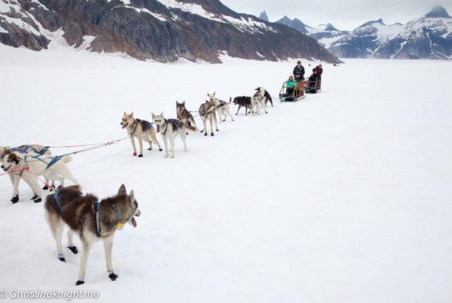Dog Sledding In Juneau on the Norris Glacier Alaska