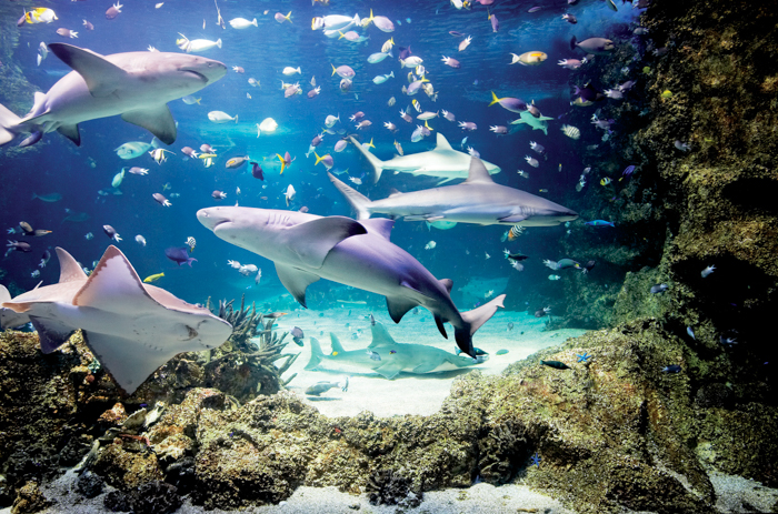 SEA LIFE Sydney Aquarium, Australia