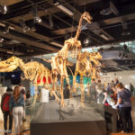Places To Visit In Melbourne: Melbourne Museum
