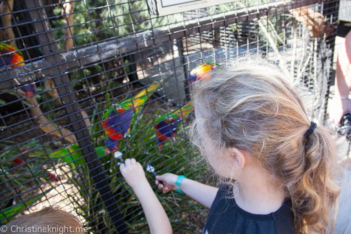 Sydney Day Trips: The Australian Reptile Park #sydneydaytrip #familytravel #australia