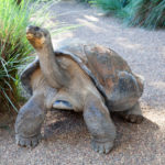 Sydney Day Trips: The Australian Reptile Park