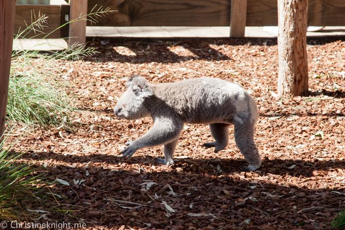 Featherdale Wildlife Park, Sydney, Australia