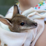 Featherdale Wildlife Park: Behind-The-Scenes Experiences