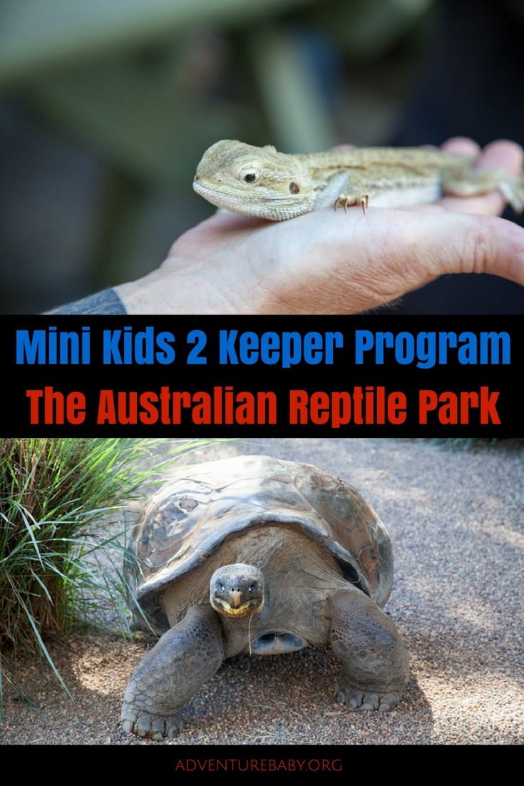 Sydney Day Trips: The Mini Kids 2 Keeper Program at The Australian Reptile Park #sydneydaytrip #familytravel #australia