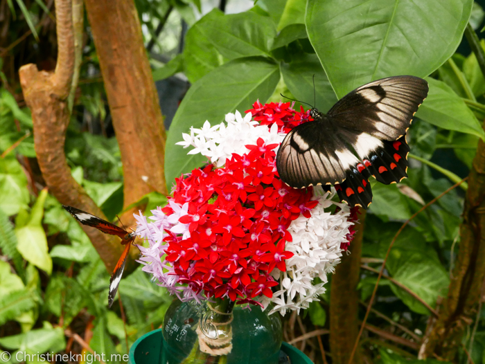 The Butterfly House, Coffs Harbour