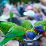 13 Must-Do Experiences at Currumbin Wildlife Sanctuary, Qld, Australia