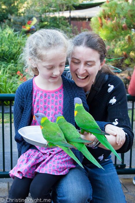 Currumbin Wildlife Sanctuary, Queensland, Australia