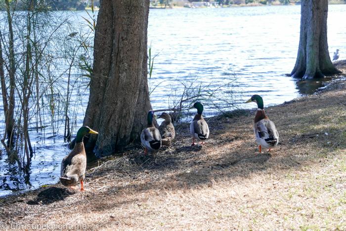 Narrabeen Lagoon, Sydney