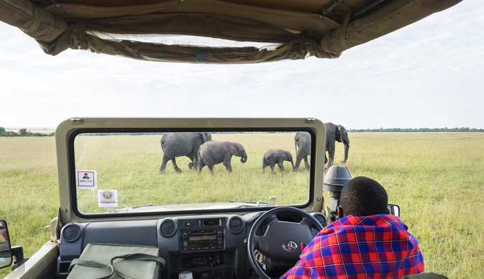 Connoisseur Signature Safari Special