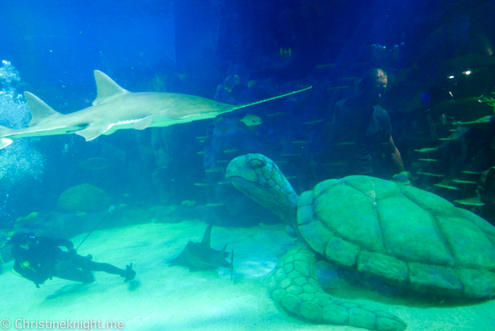 SEA LIFE Sydney Aquarium Australia