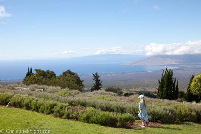 Ali'i Kula Lavender, Maui, Hawaii
