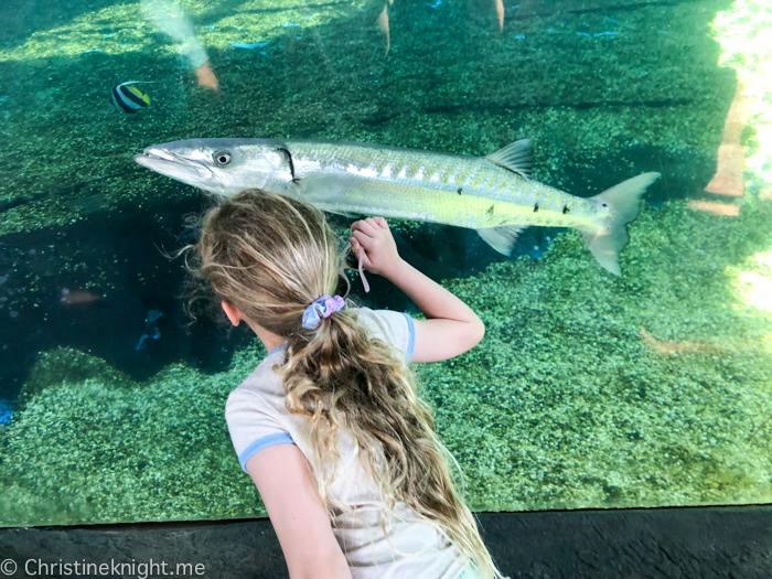 Maui Ocean Center, The Aquarium of Hawaii
