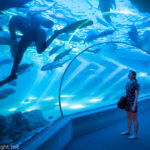 Top Tips For Visiting The Maui Ocean Center, The Aquarium of Hawaii