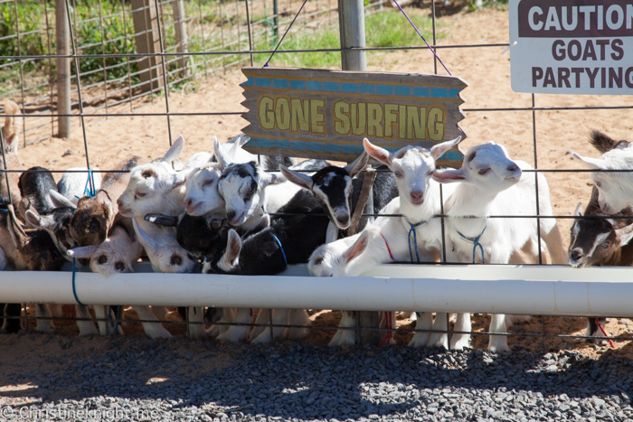 Surfing Goat Dairy, Maui, Hawaii
