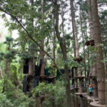 TreeTops Adventure Park Sydney - The Hills