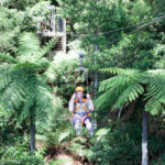 Illawarra Fly Treetop Adventures Australia