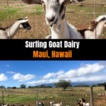 Surfing Goat Dairy, Maui Hawaii