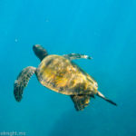 The Best Things To Do In Maui With Kids