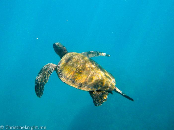 Turtle Town, Maui, Hawaii