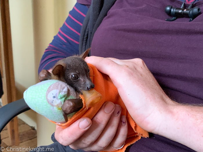 Tolga Bat Hospital, Atherton Tablelands, Cairns, Australia